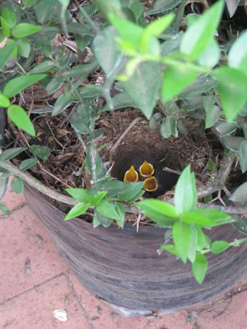 Random Harvest Indigenous Plant Nursery Muldersdrift