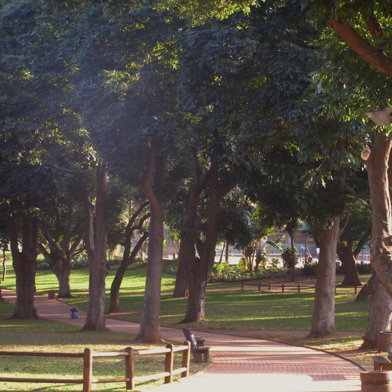 Trichilia dregeana avenue of trees