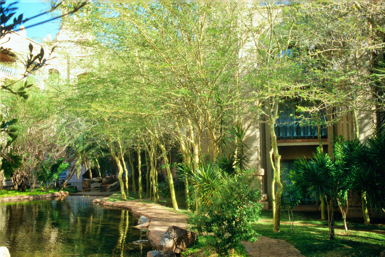 Garden Bush: Acacia Xanthophloea