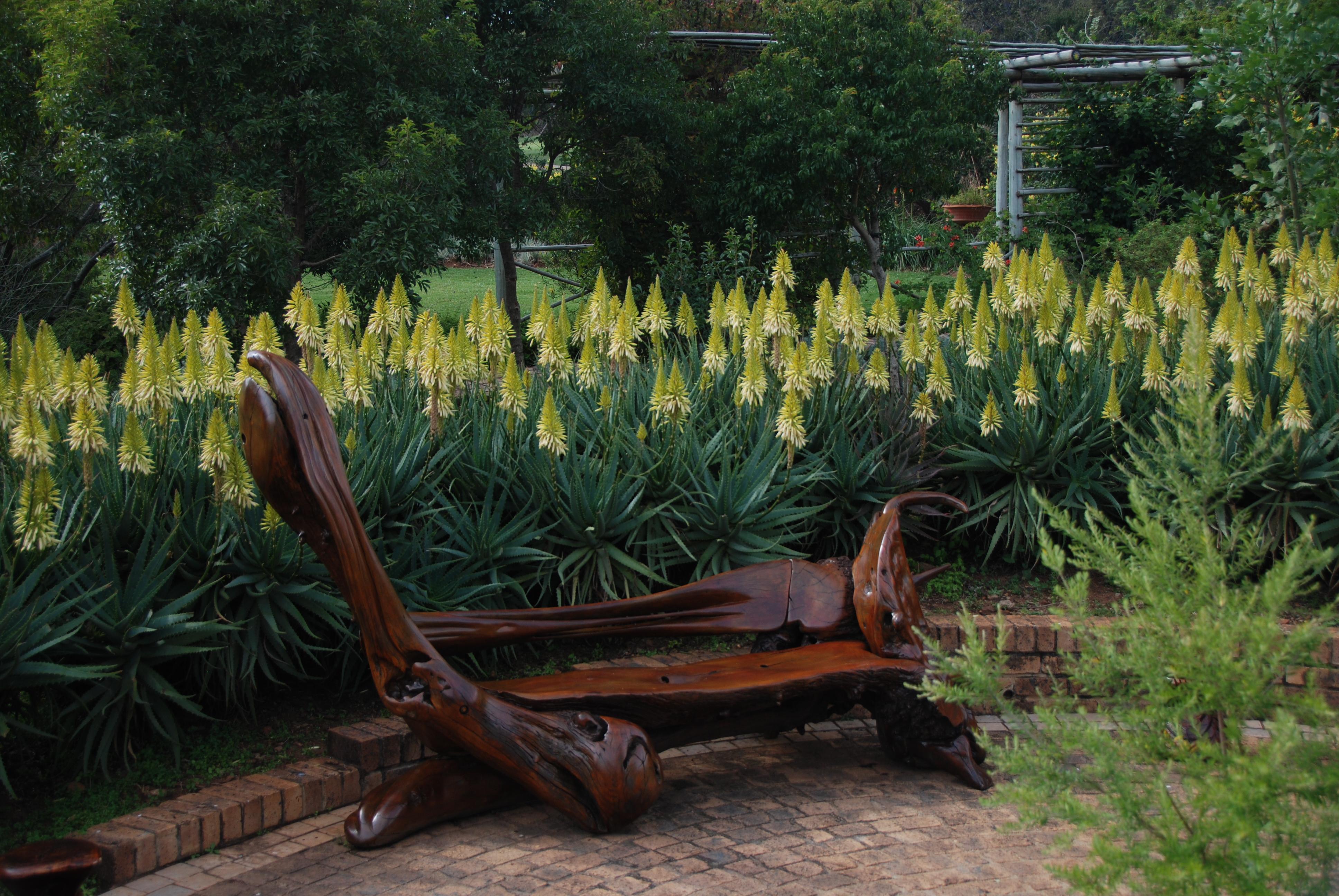 Aloe Arborescens Yellow