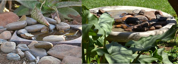 Create a Small Bird-Friendly Garden using Indigenous Plants