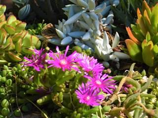 Children's Activity: Plant up a Succulent Pot