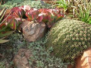 Succulents and Water Conservation Gardening